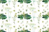 Seamless herb.  Fennel, wild chamomile, plantain. — Stock Photo