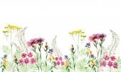 Çayır çiçekler. — Stok fotoğraf