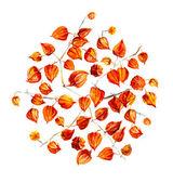 Circle from ground cherry. — Stock Photo