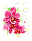 Three pink orchids. — Stock Photo
