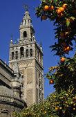 Tower and orange trees — Stock Photo