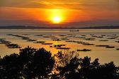 オレンジ色の夕日 — ストック写真