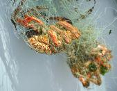 Crabs in fishing net — Stock Photo