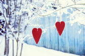 Two heart shaped valentine's hanging on the tree — Stock Photo