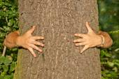 Tree hugger environmentalist — Stock Photo