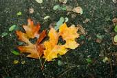 Autumn love — Stock Photo