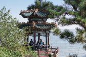 Survey platform the Nest pigeons in the Chinese city of Beidaihe — Stock Photo