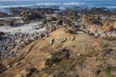 Pebble Beach Golf course California — Stockfoto