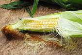 Corn on the Cob with Part of it Peeled — Stock Photo