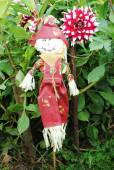Scarecrow Protecting a Field of Large Dahlia Flowers — Stock Photo