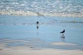 海岸にカモメ — ストック写真