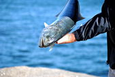 Large Catch — Stock Photo