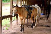 馬小屋で馬 — ストック写真