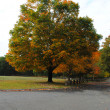 Large Tree with its Foliage Starting to Turn Color — Stock Photo #56136439