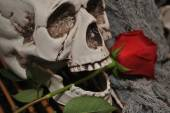 Skull with Long Stemmed Rose — Stock Photo