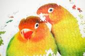 Building a Puzzle of Two Colorful Birds — Stock Photo