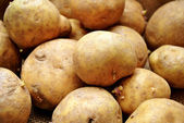 Whole Potato Background — Stock Photo