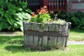 Summer Potted Plants — Stock Photo