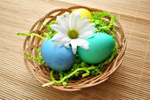 Spring Daisy on Easter Eggs — Stock Photo