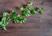 Green branch of wild grapes on wooden table — Foto Stock
