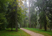 Early autumn forest after rain with mist — Stockfoto