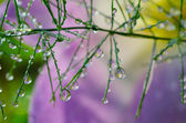 Plant with water drops — Stock Photo