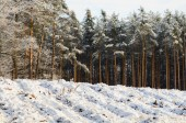 Winter forest covered with snow — Stock Photo