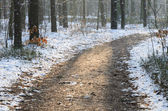 Path  in winter forest — Stock Photo
