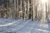 Winter forest on sunny day  — Stock Photo