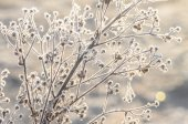 Closeup of frost on plant — Fotografia Stock