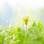 Fresh spring grass selective focus  — Stock Photo #71969125