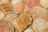 Shells composition — Stock Photo
