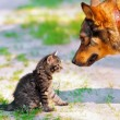 Kitten and dog — Stock Photo #52524475