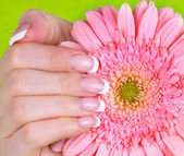 Woman's hand with gerbera flower — Stock Photo