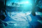 Night winter landscape — Stock Photo
