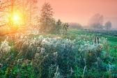 Cobwebby meadow — Stock Photo