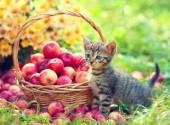Kitten near basket — 图库照片