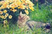 Kitten lying near flowers — Stock Photo