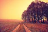 Autumnal field road and trees — Stock Photo