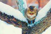 Cat sitting on the snowy tree — Stock Photo