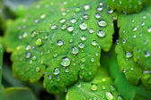 Medicinal herbs celandine — Stock Photo