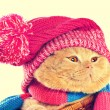 Cat wearing a pink knitting hat — Stock Photo #58053509