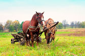 Horses with drawn cart — Stock Photo