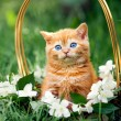 Kitten sitting in a basket with flowers — Stock Photo #58674683