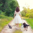 Bride with dog and cat on the rural road — Stock Photo #58674717