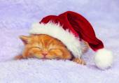 Kitten in Santa's hat — Stock Photo