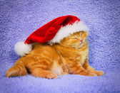 Kitten wearing Santa's hat — Stock Photo