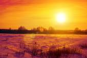 Field in winter at sunset — Stock Photo