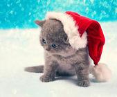 Little Christmas kitten — Stock Photo