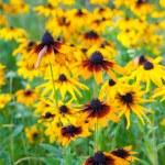 Beautiful flower lawn — Stock Photo #59823925
